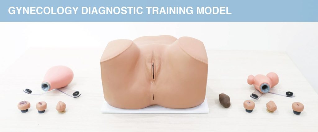 Gynecology Diagnostic Training Model